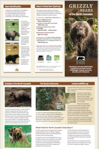 Grizzly Bears of the North Cascades brochure image