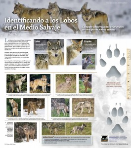 WWO Spanish Identifying Washington's Wolves