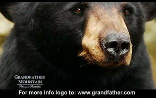 Bear Safety Grandfather Mountain