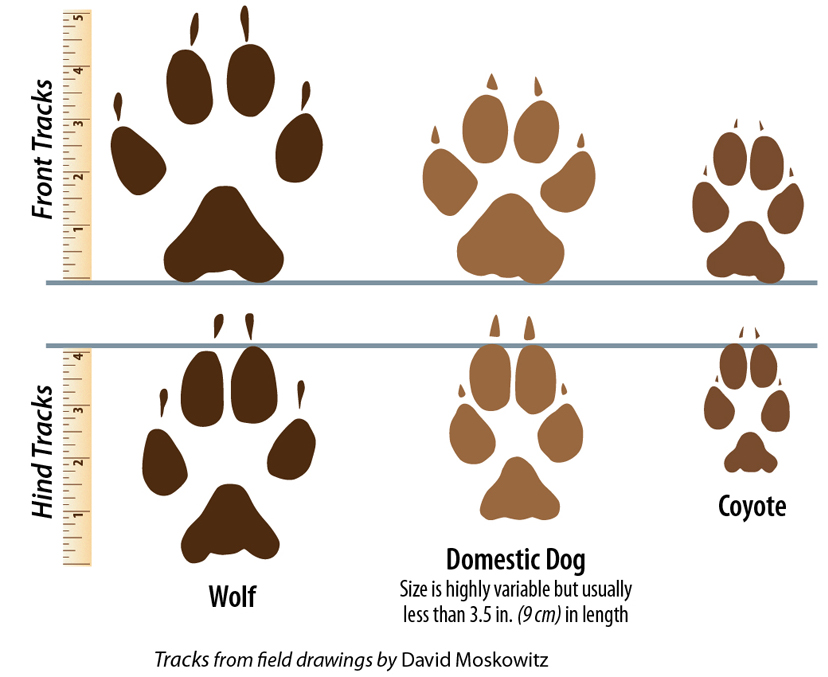 Signs of Wolves - Western Wildlife Outreach